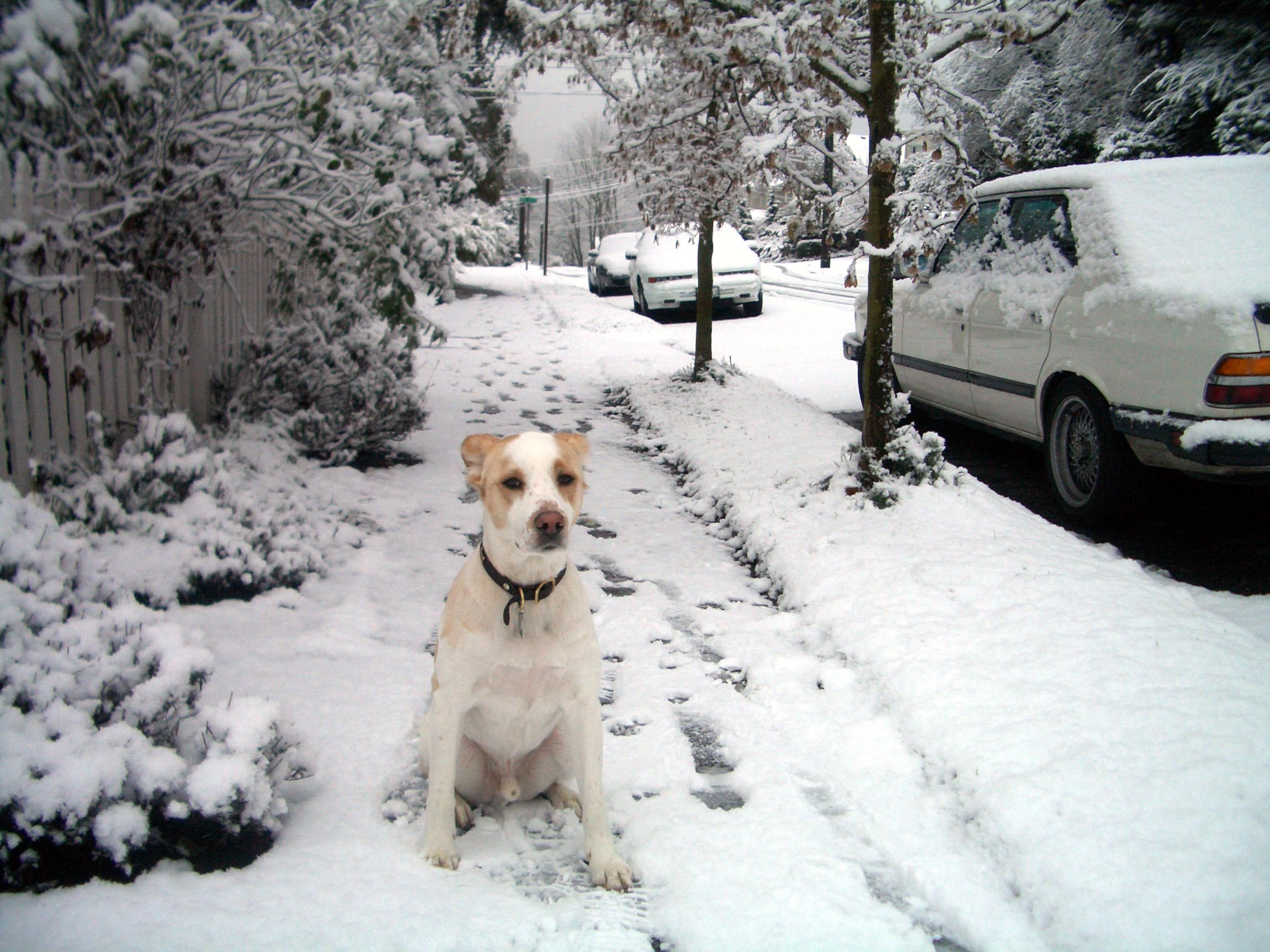 zach the dog in the snow